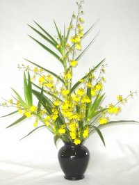 6 pc. Oncidium Sprays