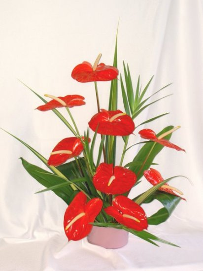 9 pc. Red Anthuriums - Click Image to Close