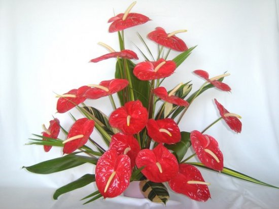18 pc. Red Anthuriums - Click Image to Close
