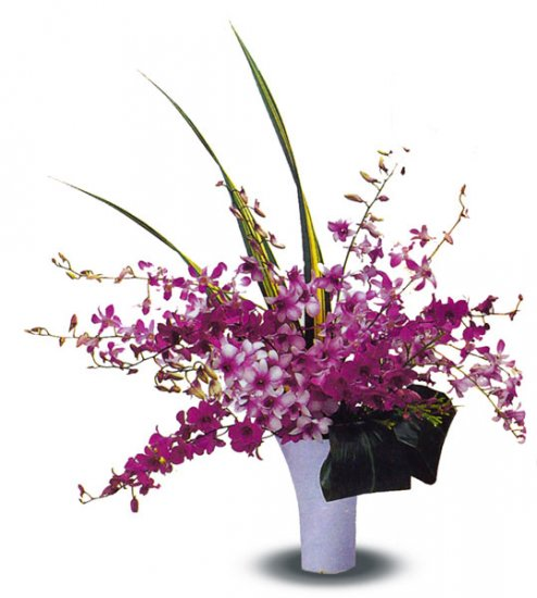 12 pc. Mixed Color Dendrobiums - Click Image to Close