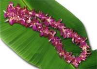 60 Blossom Orchid Lei