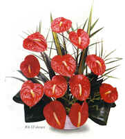 12 pc. Red Anthuriums