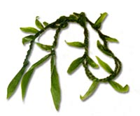 Double Ti Leaf Lei - Click Image to Close