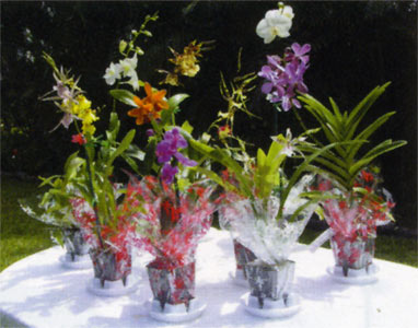 16 pc. Potted Orchid Assortment - Click Image to Close